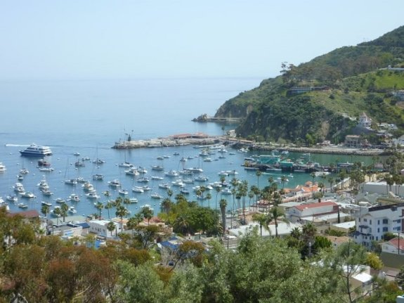 View of Catalina's Avalon Harbor from the rolling hills above