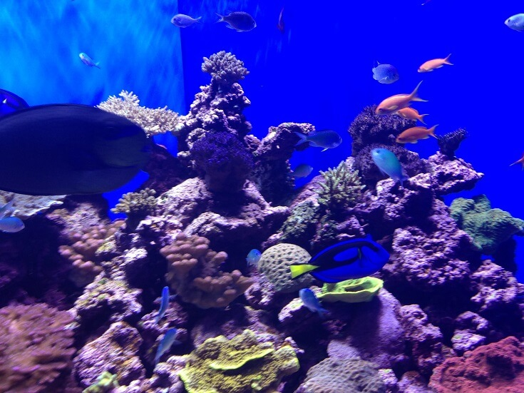 Colorful fish in one of many aquariums