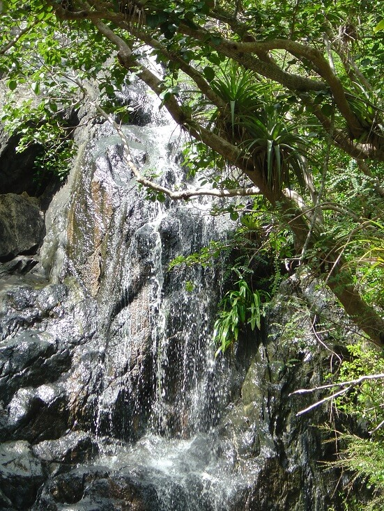 Reef bay Trail Waterfall at the Petroglyphs in St John