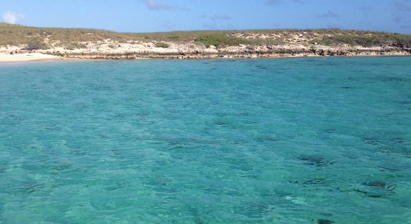 Grand Turk stingray swim