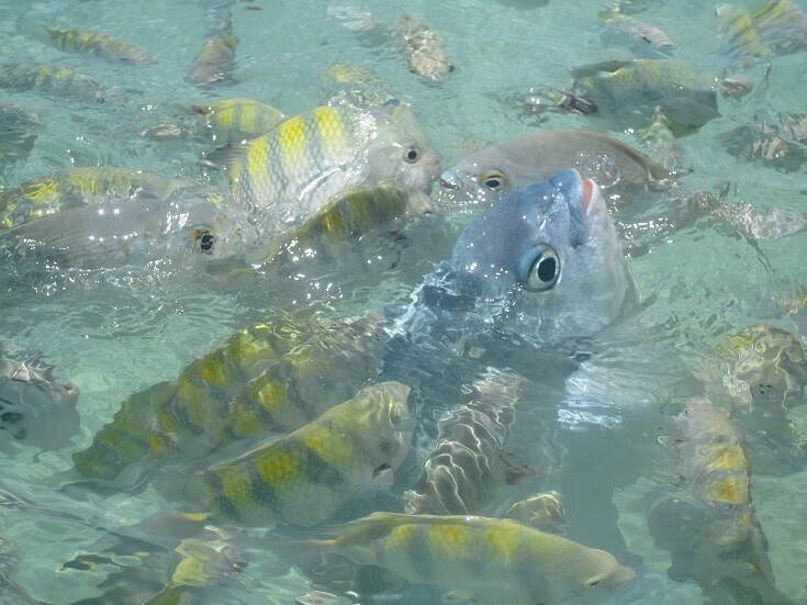 Fish frenzy while snorkeling, Isla Mujeres Mexico