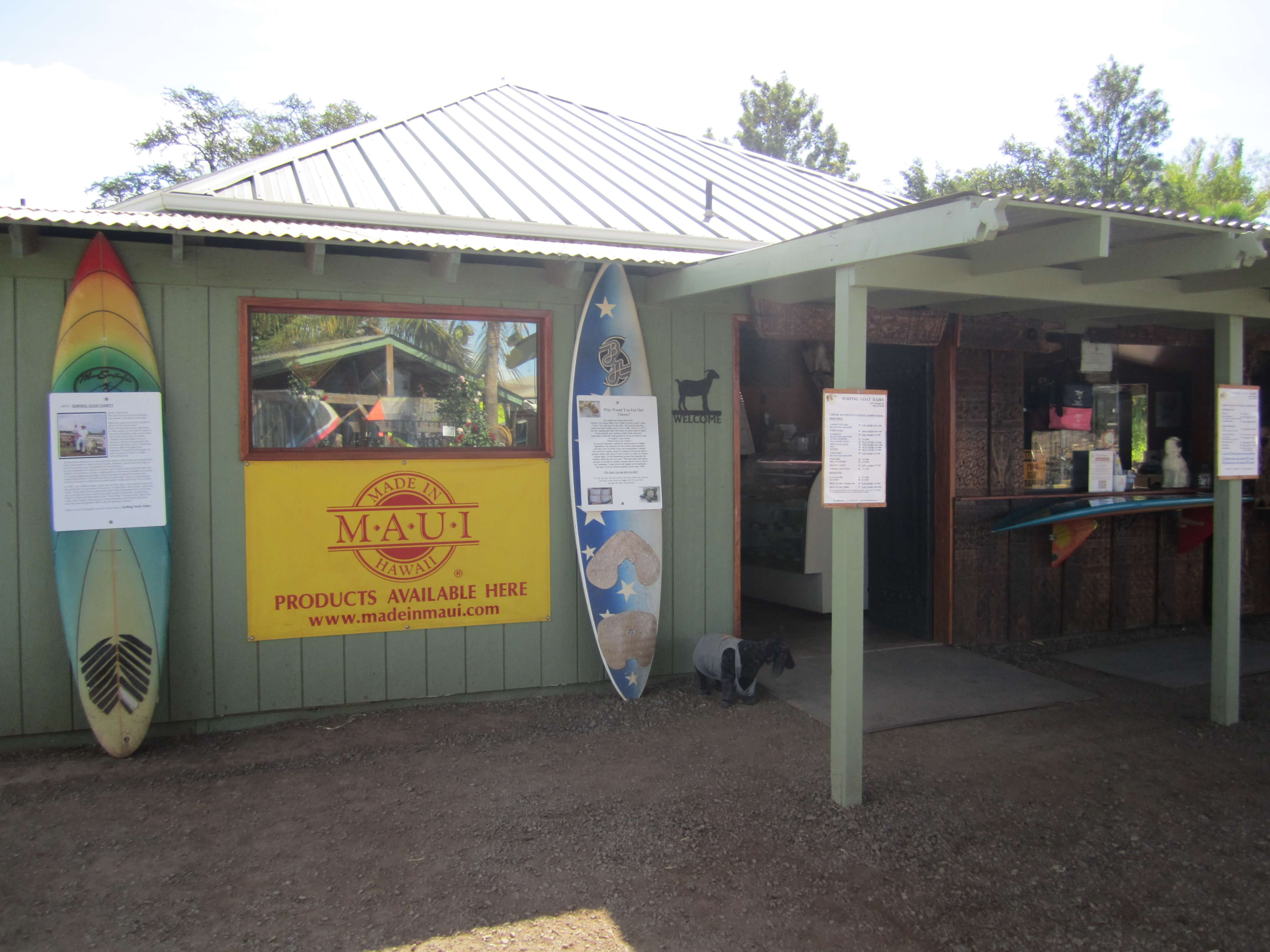 Surfing Goat Dairy in Upcountry